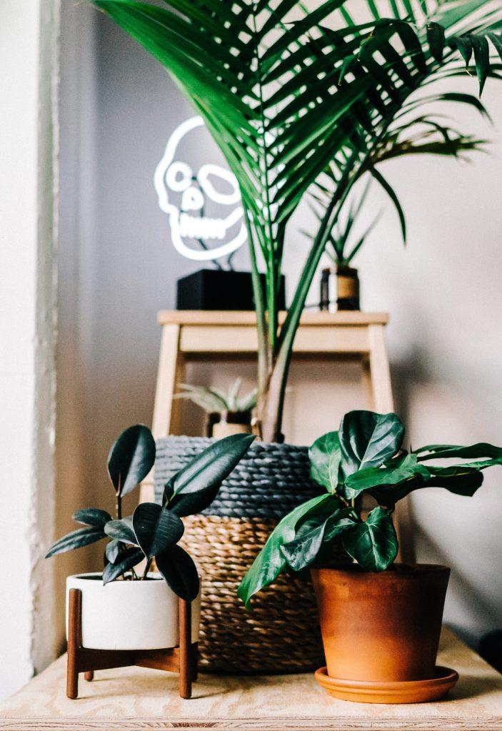 indoor plant smell hacks
