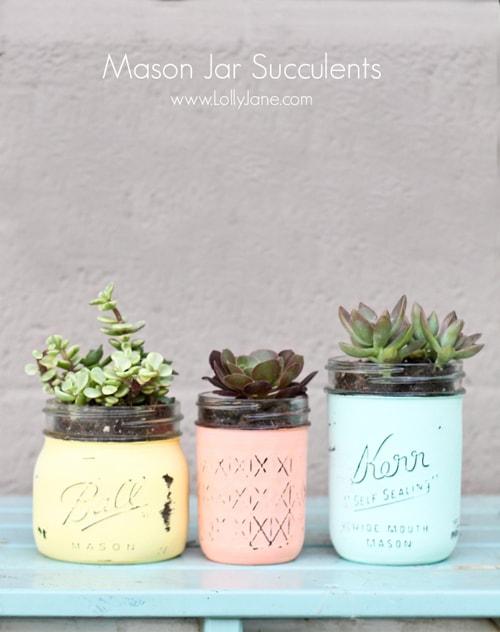 mason-jar-succulents